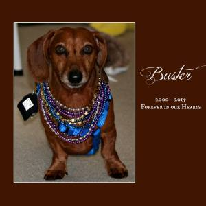 Buster2000-15